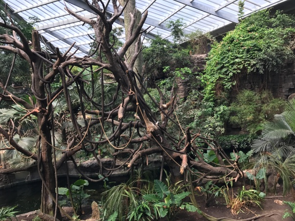 Part of the jungle exhibit at Henry Doorly Zoo